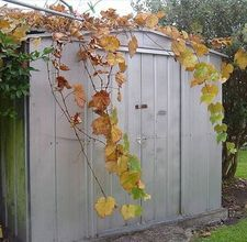 Tips for painting a metal shed...hopefully our next project (along with fixing the door to it!)