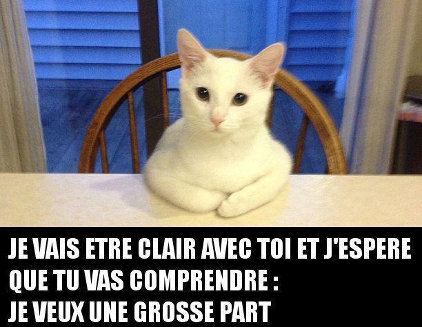 Wenn Eine Katze Sehr Hungrig Ist Und Am Tisch Sitzt Hat Sie