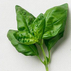 18 indispensable herbs | Basil | Sunset.com