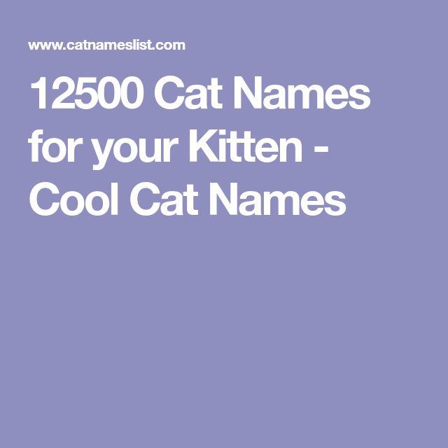 12500 Cat Names For Your Kitten