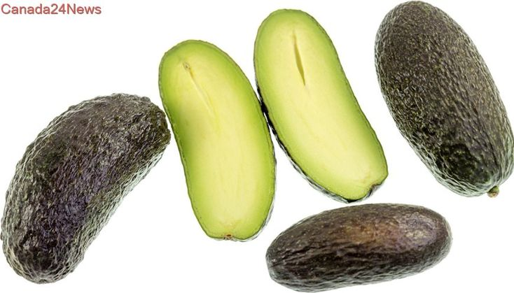 Britain gets seedless avocados to prevent knife injuries