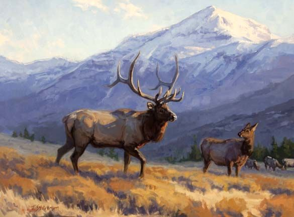 """Artist and painter Tiffany Stevenson's """"A Greater View,"""" an original fine wildlife art oil painting of a bull and cow elk in front of Jackson Peak near Grand Teton National Park in Wyoming"""