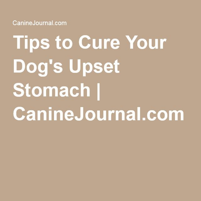 Why does my dog have a stomach ache?