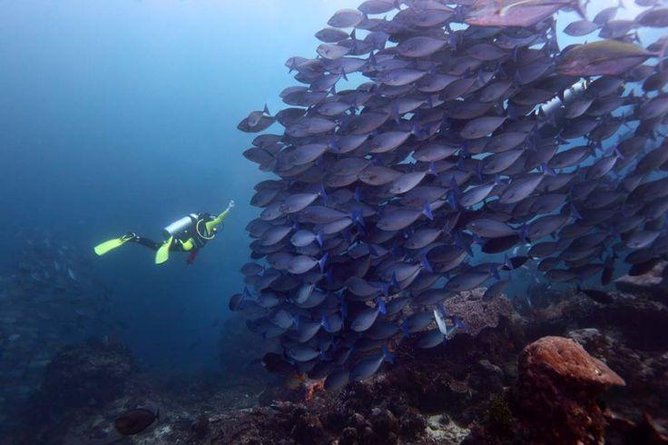 Seorang penyelam bertemu kawanan ikan di dive site Castle Rock di Taman Nasional Komodo, Nusa Tenggara Timur.