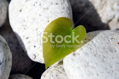 Love Heart Shaped Leaf on White Rock Background Royalty Free Stock Photo