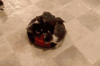 Kittens on a roomba, losing some along the way. | 33 Animal GIFs That Are Guaranteed To Make You Laugh