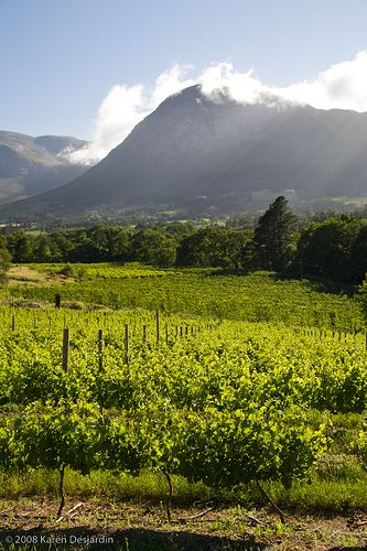 Vineyards, Franschhoek, South Africa_3619 | by womaninblack