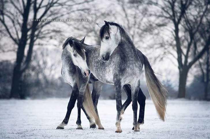 El alma de los caballos.