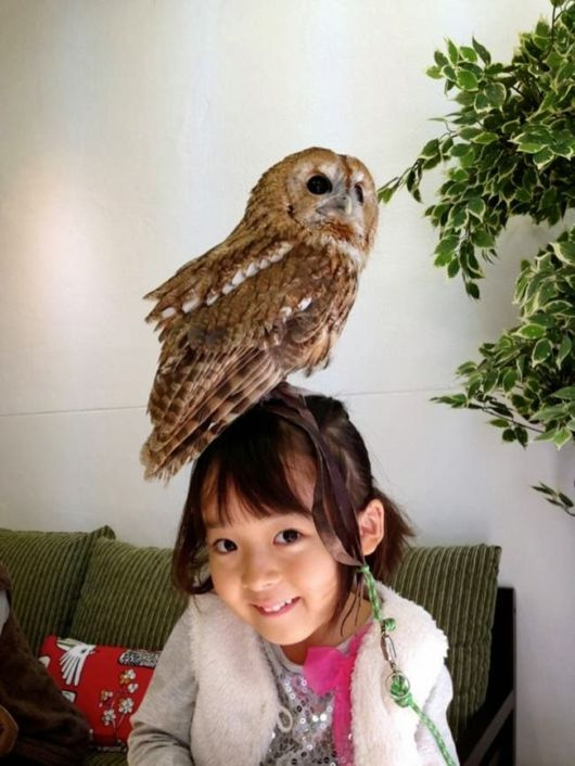 There is such thing as Owl Cafés In Japan! You pay to hangout and drink coffee with owls!!