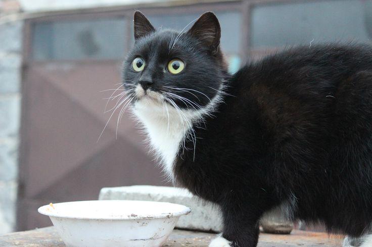 Green cat eyes.