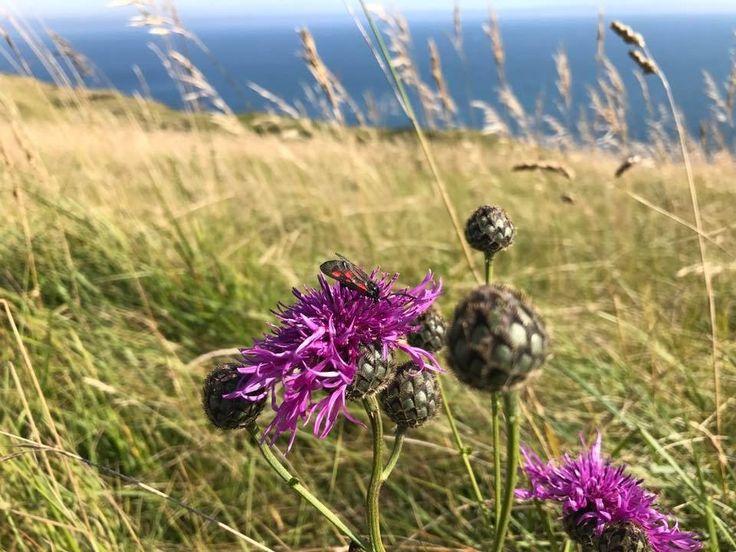 A vadvirágok sokszínűsége elbűvölő. http://balkonada.cafeblog.hu/2017/07/08/a-videki-anglia-vadviragai/