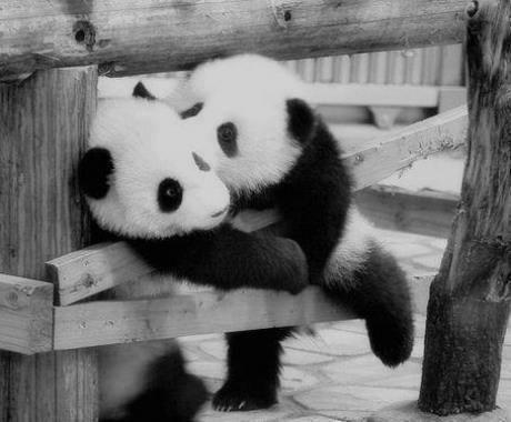 amor de pandas | cosas en las que pienso | Pinterest | Amor and Pandas