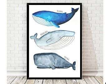 Poster Whale Print For Children Watercolor Pictures