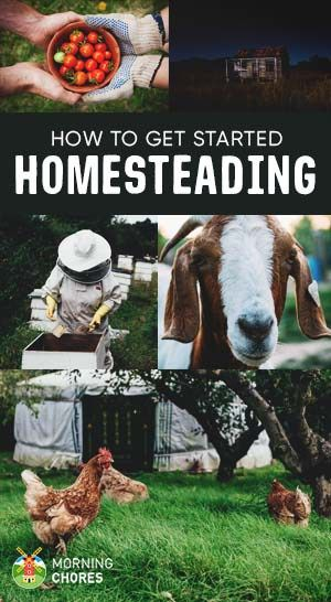 Homesteading 101: What Is It and the Essential Steps to Get Started