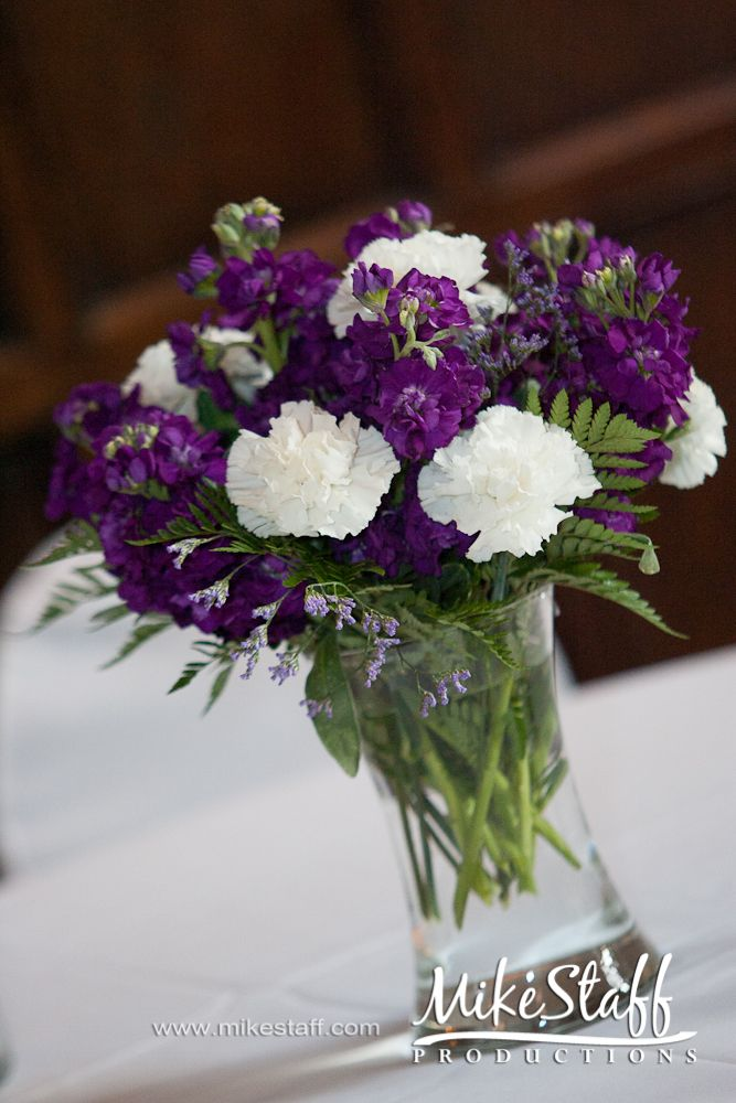 Best purple carnations ideas on pinterest