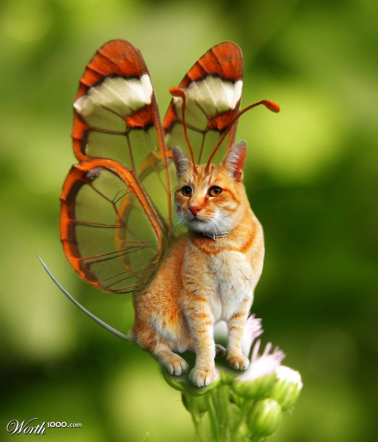 Pet Pussifly - Worth1000 Contests