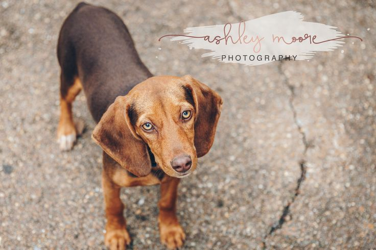 Beagles Ashley Moore Photography Canon 6D Sigma 24-105 Art