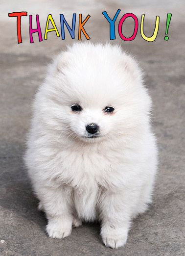 Funny Thank You Card Dog Puppy Thanks Thank You Cute Im