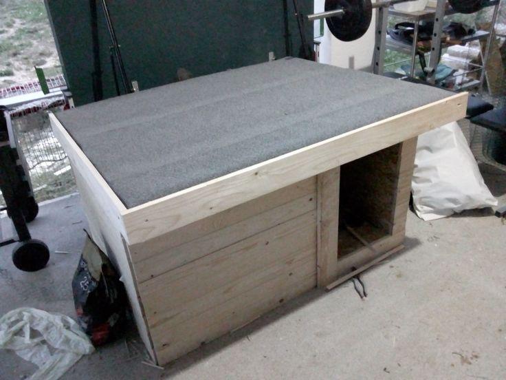 Dog house doggy