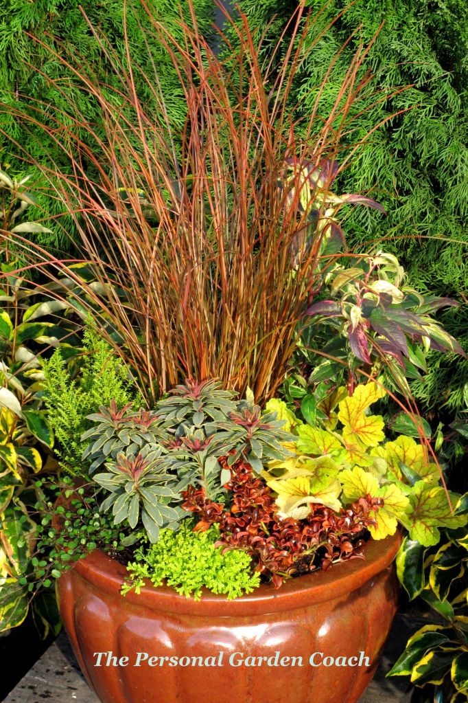 Choosing Winter Foliage That Says WOW! - The Personal Garden Coach