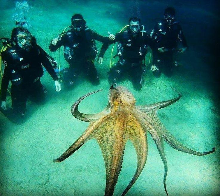 #ayvalik3sea #dalismerkezi #scuba #octopus #koraygerce #cunda #dalis #sualti #ahtapot #denemedalisi (Ayvalik 3 sea dalış merkezi)
