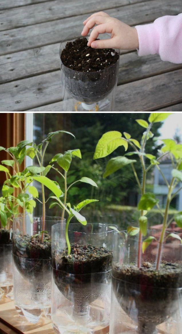 Handmade Bottle Planter