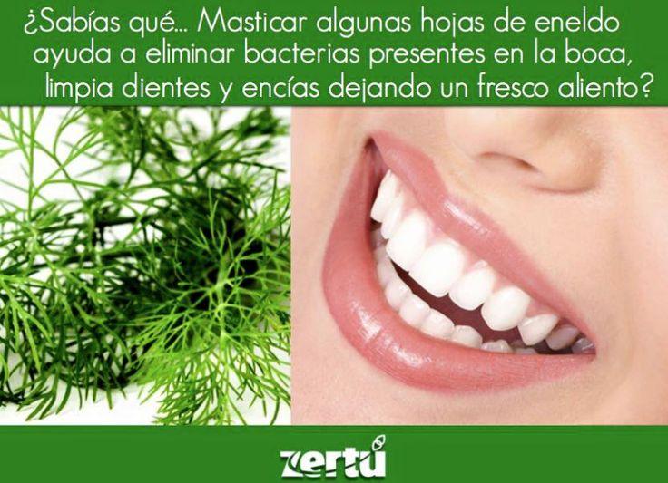 El #ENELDO es un excelente aliado para la #salud bucal. @zertumx