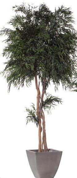 Nicoly Tree