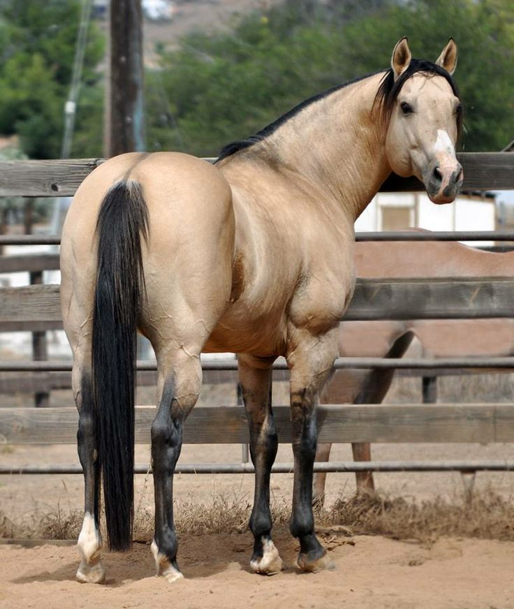 how to train a quarter horse for barrel racing
