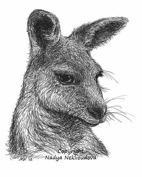 Kangaroo Art Print - 8x10inches (20x25cm) - Australian animal wildlife art - pen and ink drawing. $25.00, via Etsy.
