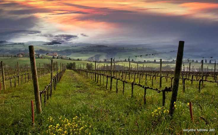 Umbria's countryside is amazing in any season as you can see in this beautiful shot of an Umbrian Vineyard by G.Peppoloni. Ready for that Wine Tour? Get in touch!