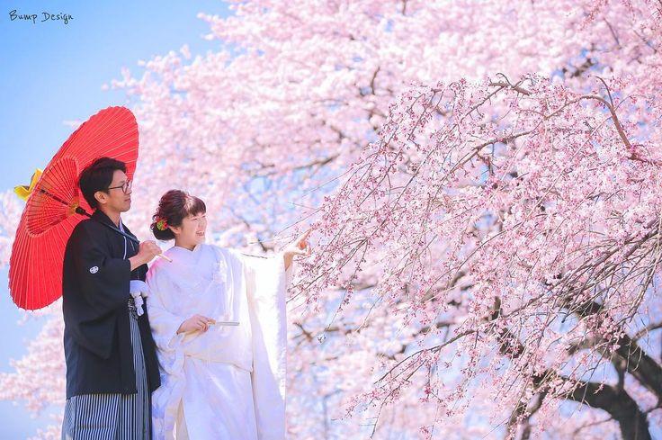 #桜前撮り 大成功っ()  今年は開花がおそく 苦しみましたが どーしても二人のために 桜と撮ってあげたいっ  徹夜で探しまくって 早咲き桜が満開なスポット を発見  撮影日前日に ロケ先変更しちゃいました  ここなら 爽快な青空をバックにできるぞ  青空と桜さらに人物まで 絡めたポートレートって 実はなかなか撮れない  ここはそんな写真が撮れる 最高の場所でした  来年もここ来ようかな  #プレ花嫁 #日本中のプレ花嫁さんと繋がりたい #結婚式準備 #ドレス試着 #前撮り#ウェディングフォト#ロケーションフォト#ウェディングドレス #和装#weddingtbt #満開#桜