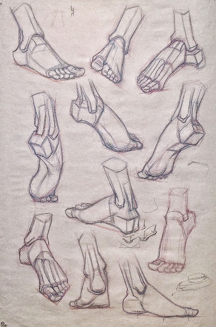 Foot structural drawing for class -Gary Geraths