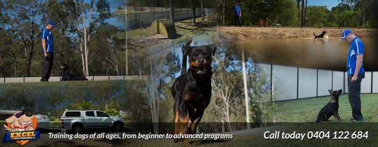 In Kennel Dog Training Brisbane
