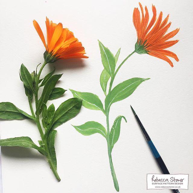 Marigold painting by Rebecca Stoner #marigolds #botanical #flowerstudy