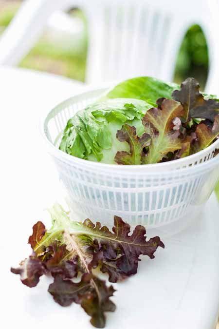 Looking to get your leafy greens as dry as possible? You need a salad spinner. Read our handy guide to assist you with picking one out of the many models.