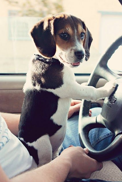 They grow up so fast. One day they're teething on your shoes, the next . . . learning to drive.