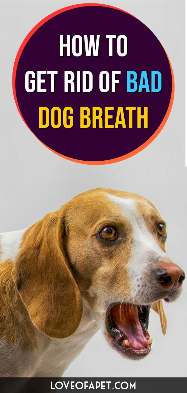 How To Get Rid Of Bad Dog Breath Treatments And Prevention Love Of A Pet In 2020 Dog Breath Bad Dog Breath Bad Dog