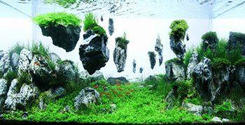 世界水草レイアウトコンテストは毎年開催されており、たくさんの魅力的且つクリエイティブなアクアリウムたちが、たくさん出展されます。 受賞作品たちは、どれも圧巻です。