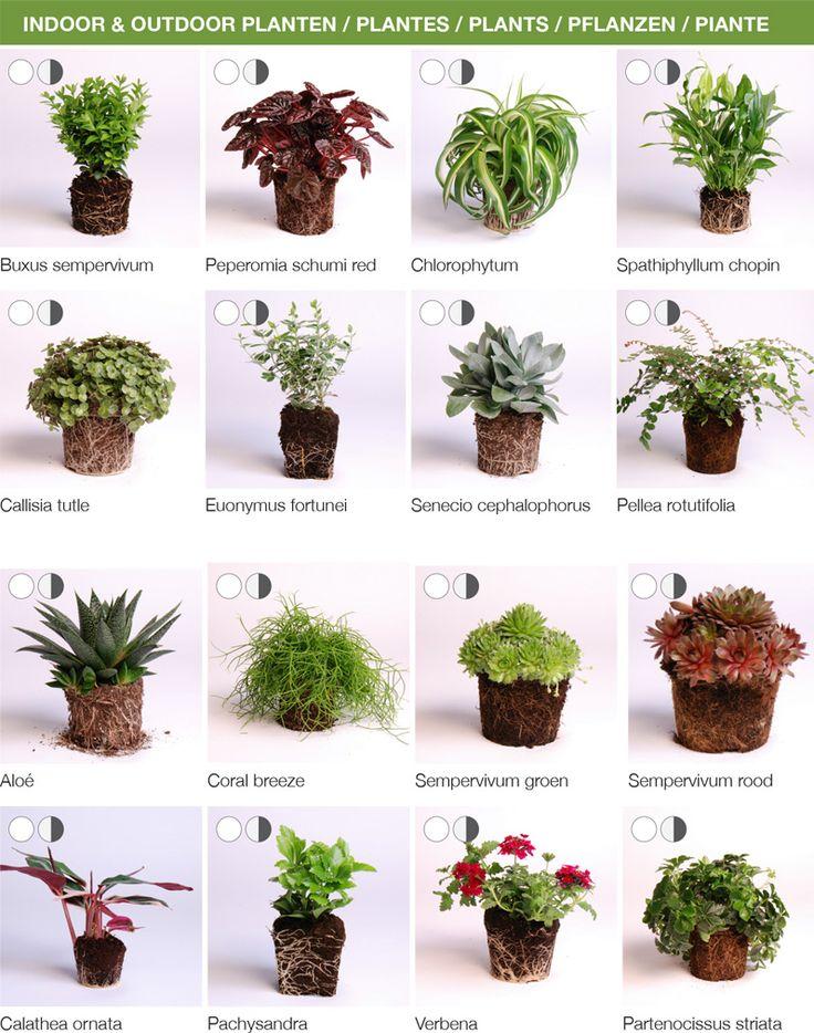 Pflanzenempfehlungen für Vertikale Gärten und dem Modul Karoo von D&M depot. Im Online-Shop Stadtlandbalkon.de