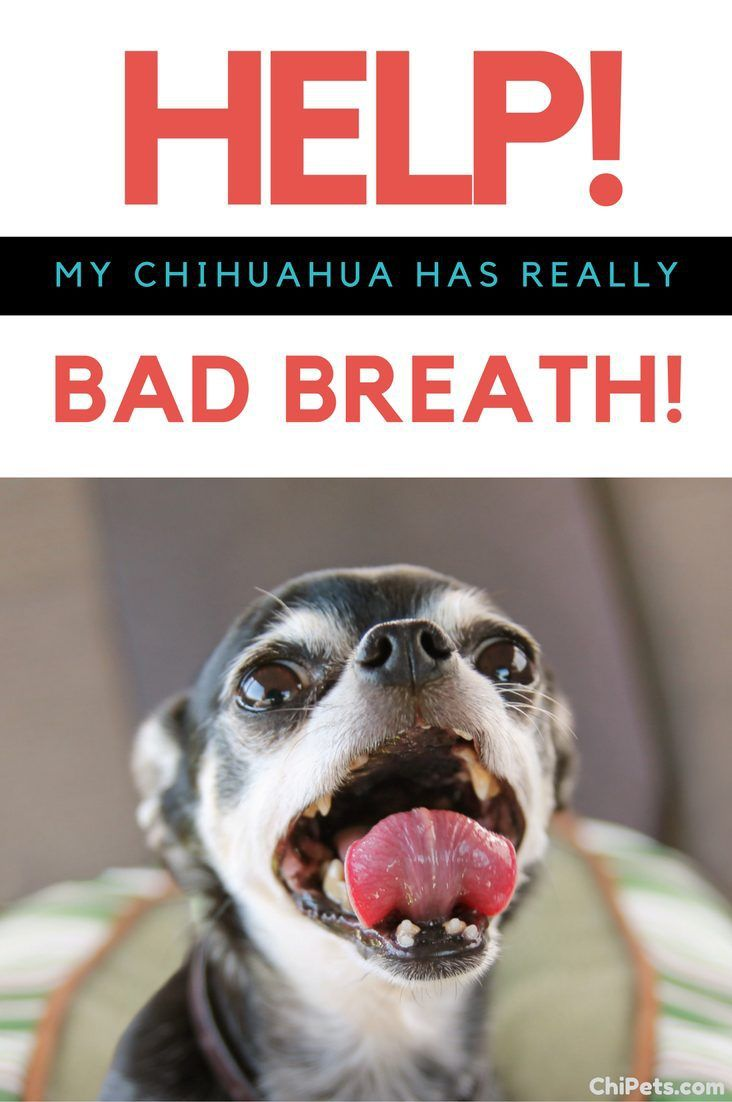 You love your dog, but you can't stand their breath! Here are some simple answers to help you combat your dog's bad breath.