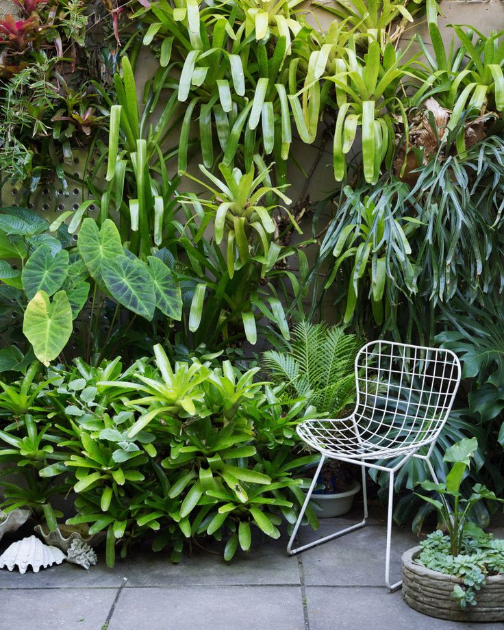 """mamisgarden: """" """" I have a theory that inner city areas, with tiny houses, tiny gardens and lots of surrounding hard surfaces are the best places for jungle gardens (except for the Amazon, of course). Why? Well, because these spaces are often..."""