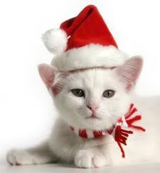 White cat in a Santa hat and scarf.                                                                                                                                                                                 More
