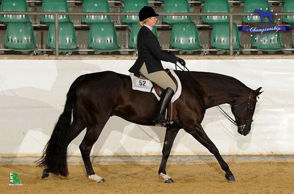 hunter under saddle lope | Holten den Titel in der Senior Hunter under Saddle Open: My Final Say ...
