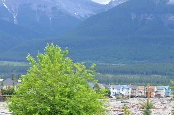 Beauty and destruction - Cougar Creek, Canmore