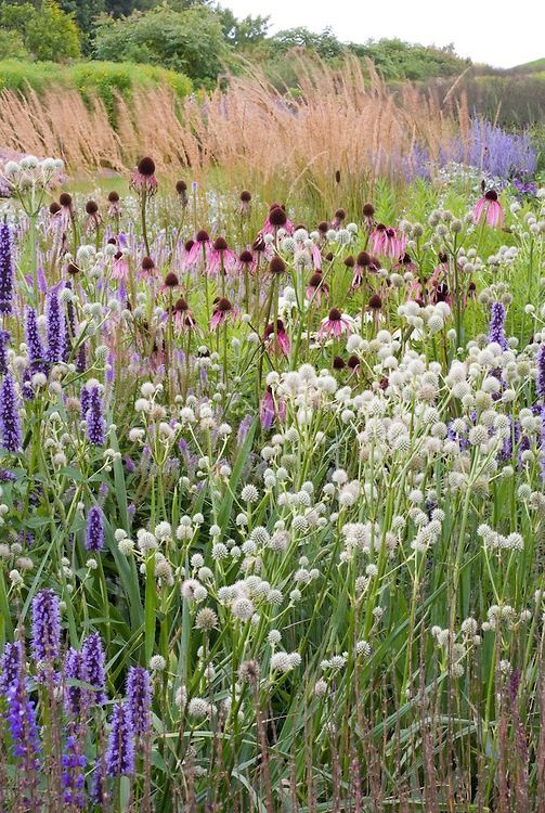 17 best images about piet oudolf on pinterest gardens for Tall grass border