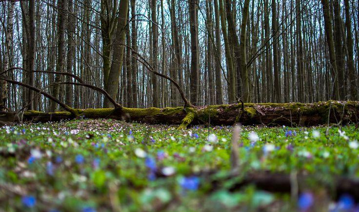 Spring in National Park Podyjí (Czech Republic) by Hubert Müller on 500px