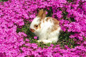 różowe zwierzęta - Szukaj w Google