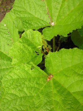 Лекарственные растения для малого сада, балконов и патио