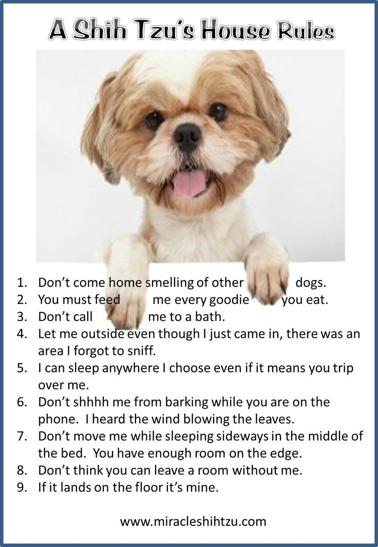 Shih Tzu House Rules at Miracle Shih Tzu http://miracleshihtzu.com/dog-quotes.html